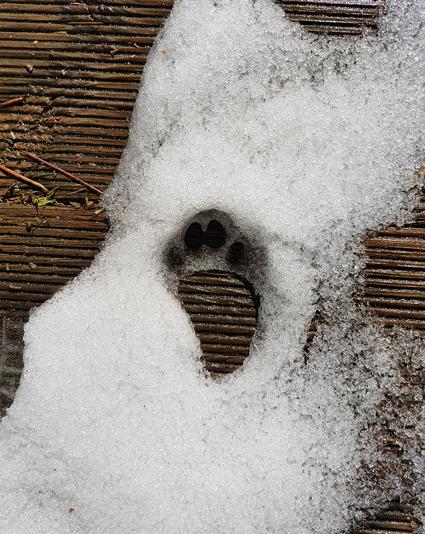 """alt="""" Cat's paw in snow"""""""